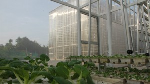 Vertical farming in Singapore. The future?